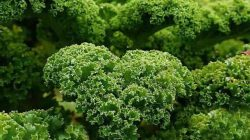 kale (pinterest)