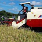 Petani jawa timur menggunakan mesin harvester untuk memanen (foto: istimewa)