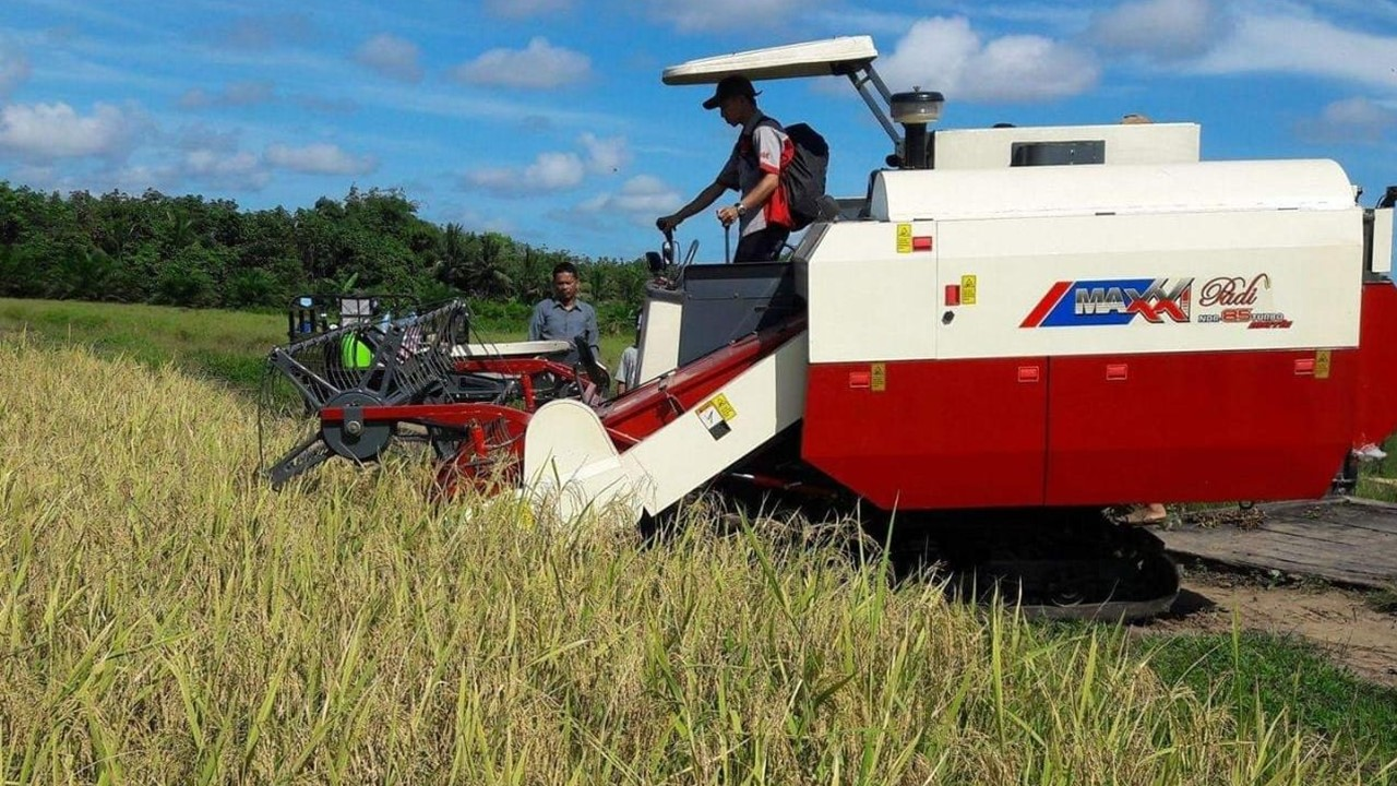 Petani jawa timur menggunakan mesin harvester untuk memanen