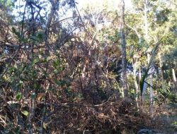 Pohon Beringin Umur Ratusan Tahun Tumbang, Petani Khawatir Kekurangan Air