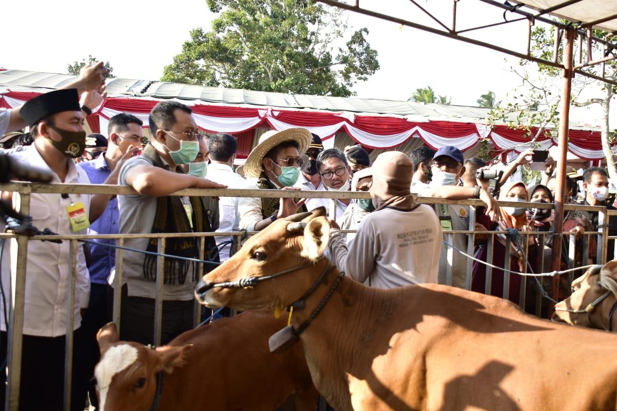 Wujudkan Swasembada Daging, Mentan SYL Panen Pedet di Lombok Tengah