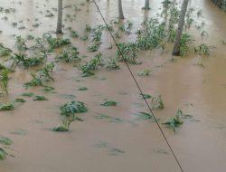 Jaga Produksi Pangan, Kementan Gerak Cepat Antisipasi Dampak Cuaca Ekstrem