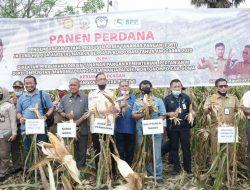 Gowa Sukses Mandiri Produksi Benih Jagung Hibrida