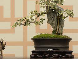 Tanaman Bonsai, Sejarah Asal Mula dan Penyebarannya