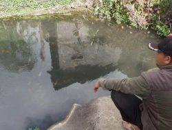 Warga Dieng Pelihara Ikan di Air Hangat, Ikan Lebih Cepat Besar