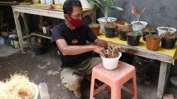 Agus Winarno memanfaatkan sabut kelapa media tanam. Di rumahnya, di Desa Kedungturi, Kecamatan Gudo, Jombang, Jawa Timur, bapak 1 anak itu juga membuat cocopeat dan cocofiber sebagai media tanam.(KOMPAS. COM/MOH. SYAFIÍ)
