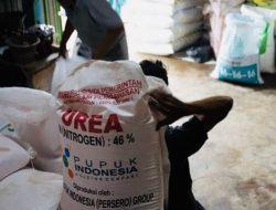 Petani Bingung, Di Tulungagung Boleh Beli Pupuk Subsidi Tanpa Kartu Tani