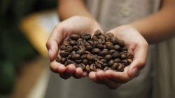 Biji kopi Indonesia