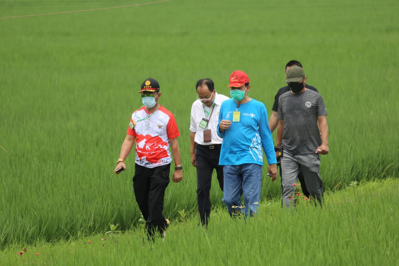 Jaga Kebutuhan Pangan di Tengah Pandemi, Mentan Dorong Urban Farming di Jakarta