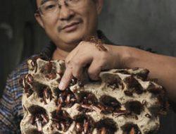 Peternakan Kecoak Atasi Lonjakan Limbah Sisa Makanan di Cina