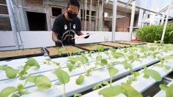 David Sugianto, menanam sayur hidroponik di atas atap toko pakaiannya