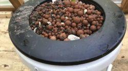 Hidroponik dengan ember