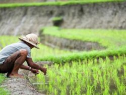Alih Fungsi Lahan Pertanian Ancam Ketahanan Pangan, Mentan: Tidak Boleh Disepelekan
