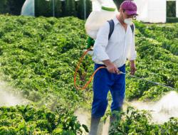 Dampak Negatif Penggunaan Pestisida Secara Berlebihan
