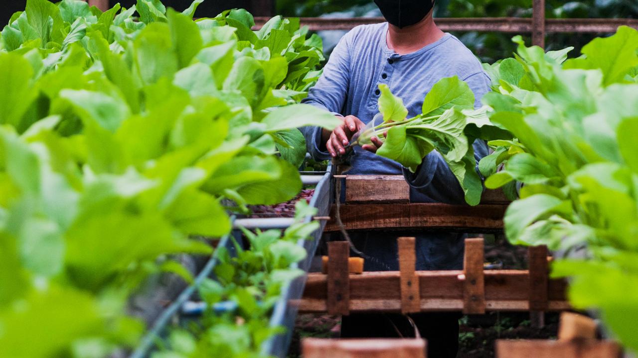 Petani Muda Sukses