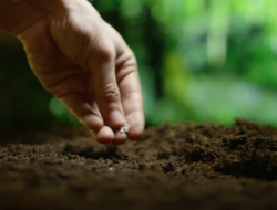 Tips Mudah Membuat Tanah Menjadi Subur