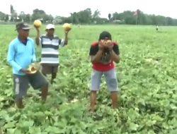 Gagal Panen, Ekspresi Petani Jombang ini Hebohkan Dunia Maya