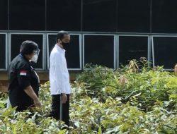 Presiden Jokowi Targetkan Distribusi 16 Juta Bibit ke Lokasi Rawan Bencana