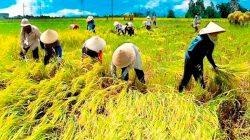 Ilustrasi: Masyarakat kota pulang ke kampung halaman jadi petani
