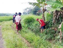 Petani Desa Plumbon Kaget Temukan Irigasi Sawahnya Dibanjiri Uang Jutaan