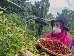 Urban Farming: Panen Serentak di 228 Titik di Jakarta