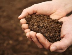 Cara Mudah Mengenali Kualitas Tanah Tanpa Menggunakan Alat