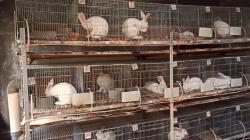 Sukses memulai usaha budidaya kelinci