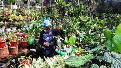 merawat tanaman hias 2