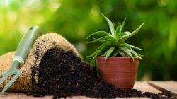 pupuk organik tanaman