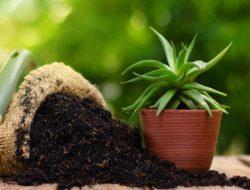 Keunggulan Pupuk Organik Untuk Tanaman