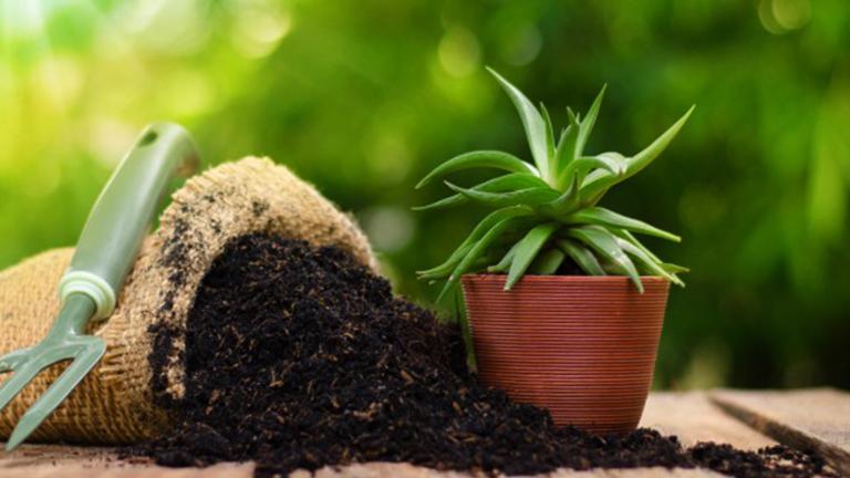 Pupuk organik bagi tanaman