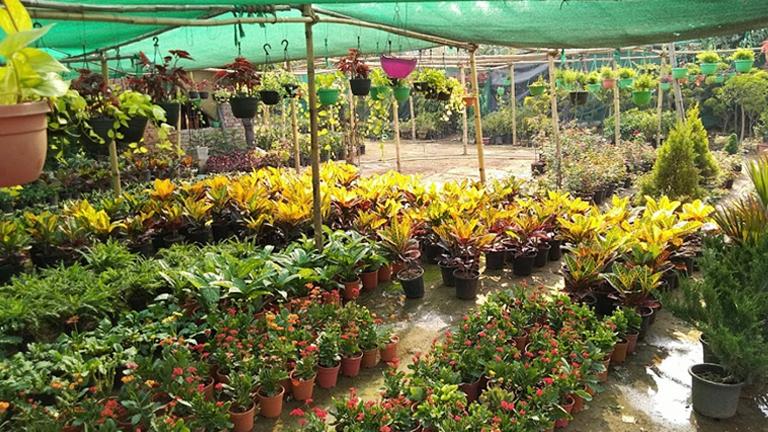 Usaha tanaman hias