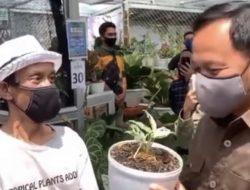 Bukan Cuma Netizen, Wali Kota Bogor juga Kaget Tanaman Hias di Bogor dihargai Rp 80 Juta