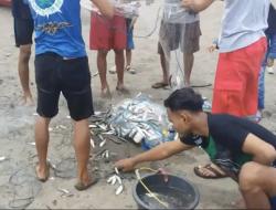 Ribuan Ikan Lemuru yang Terdampar di Teluk Penyu Hebohkan Warga Cilacap