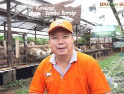 Simak Kiat Sukses Beternak dari Owner 'Kambing Burja' dan 'Domba Dorsip'