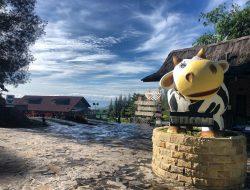 Akhir Pekan ke Mana? Kunjungi Peternakan Sapi Perah Gundaling Farmstead, Wisata Sambil Belajar