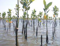 KKP Siap Bersinergi untuk Pengembangan Ekosistem Mangrove Nasional