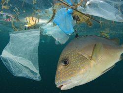 Seafood di Pesisir Utara Jatim Terkontaminasi Mikroplastik