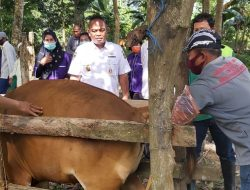 Dispertanakbun-Kelompok Ternak Belimbing Mekar Palopo Lakukan IB, Kadis: Tingkatkan Populasi Sapi