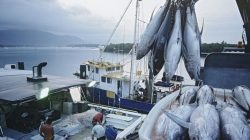 Ilustrasi Aktifitas ekspor perikanan