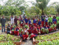 Kebun Edukasi Sarah, Cocok untuk Kamu yang Ingin Belajar tentang Pertanian