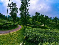 Butuh Refreshing? Catat! Lima Destinasi Wisata Perkebunan Teh yang Bisa Kamu Kunjungi di Bogor