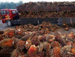 Kelapa Sawit Asal Indonesia Dilarang Masuk di Swiss, Ini Alasannya