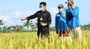 Mentri Pertanian bersama Petani