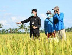 Kementan Bentuk Tim Terpadu Gerakan Serap Gabah Petani untuk Cegah Harga Anjlok
