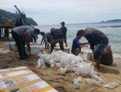 KKP Kembali Lepasliarkan Benih Lobster Hasil Sitaan Sebanyak 80 Ribu Ekor