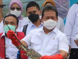 KKP Tegaskan Akan Kerja Keras Kembangkan Budidaya Lobster Dalam Negeri