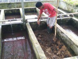 Penuhi Kebutuhan Pakan Alami Ikan, KKP Dorong Budidaya Cacing Sutera