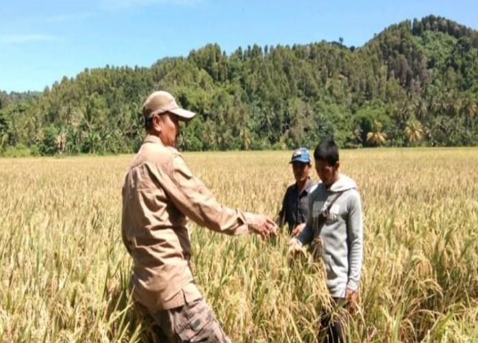 Penyuluh pertanian bersama petani