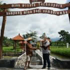 Peresmian Desa Berdaya Sejahtera Mandiri (Desa BSM) berbasis agrowisata di Desa Candi Binangun Kabupaten Sleman, Yogyakarta